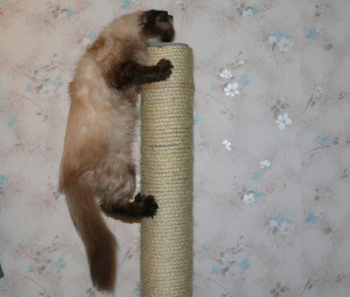 Когтеточки для котенка своими руками 576